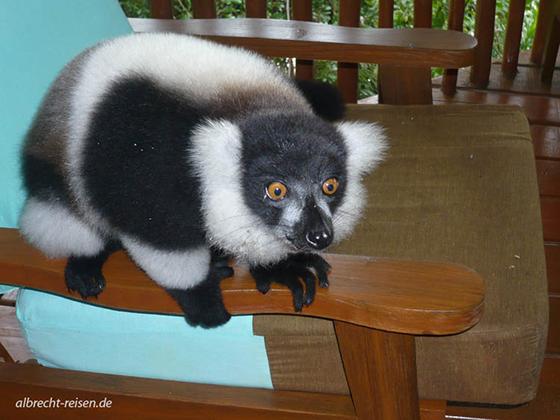 Bild des Monats: Juni 2018 - Zu Besuch bei den Lemuren in Madagaskar - oder umgekehrt?